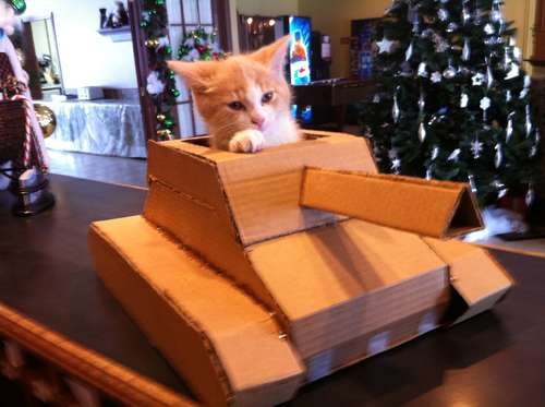 Recycle cardboard boxes to create a tank for your cute kitty.