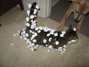 This cat went for a swim in packing peanuts! Image from College Humor.