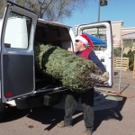 Transport Your Christmas Tree