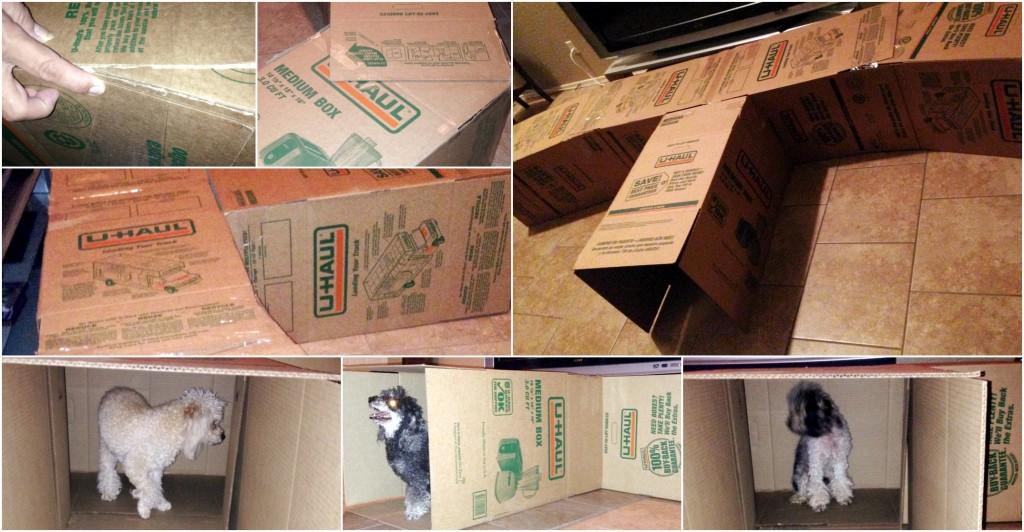 Dog Maze U-Haul Boxes