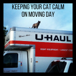 Keeping Your Cat Calm on Moving Day