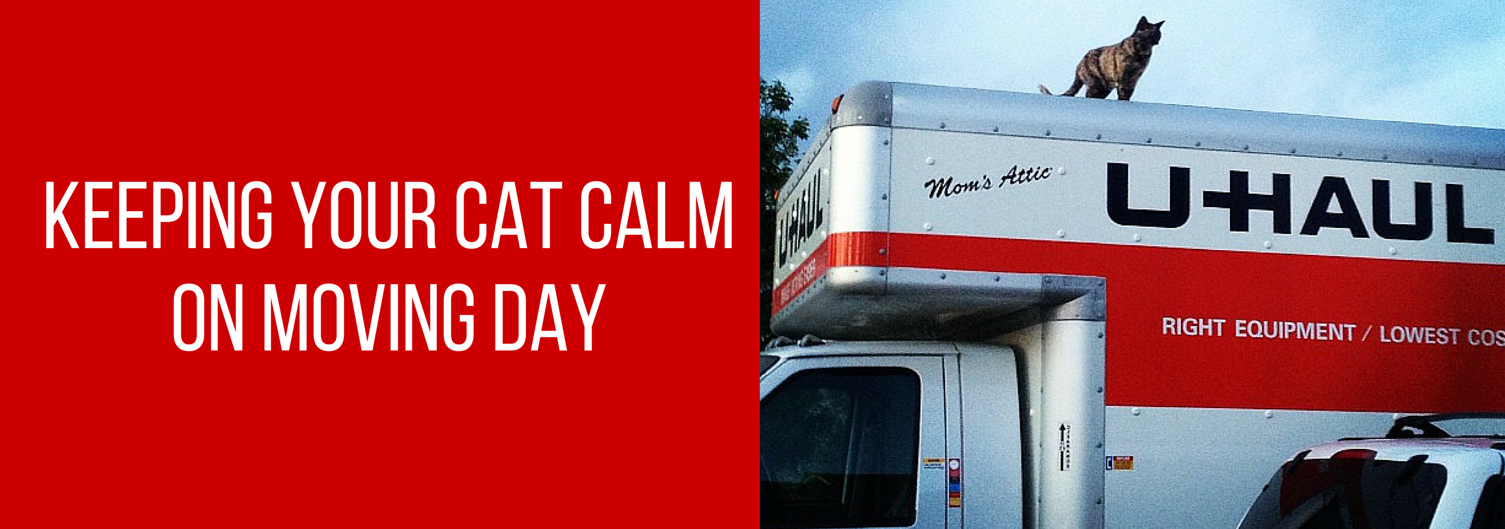 Keeping Your Cat Calm on Moving Day (2)