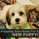 Prepping Your Home for a New Puppy!
