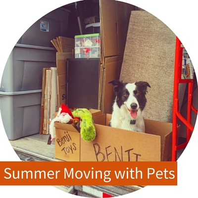 Moving in the summer with pets