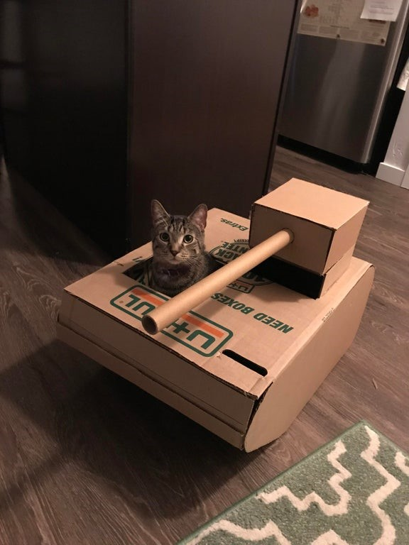 Diy Fun And Easy Way To Build A Cardboard Cat House Moving Insider
